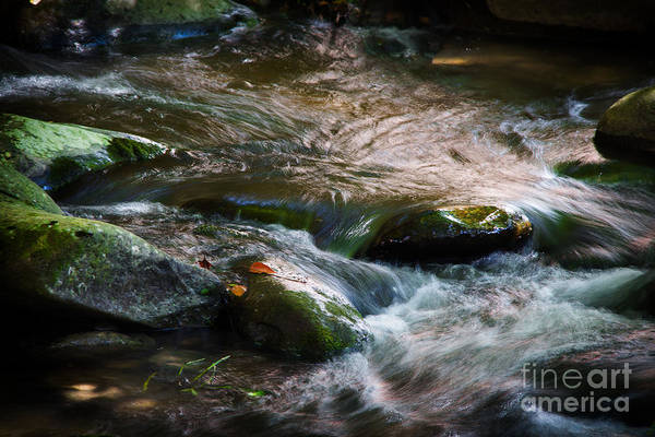 Smoky Mountains Sept 2013 Art Print featuring the photograph Rushing Waters by Cindy Tiefenbrunn