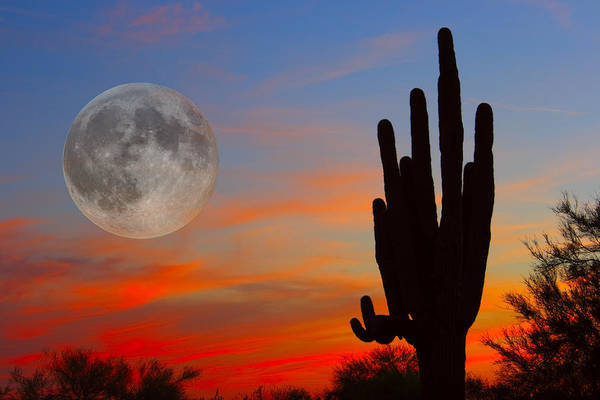 Sunrise Art Print featuring the photograph Saguaro Full Moon Sunset by James BO Insogna