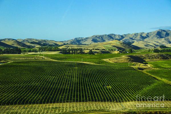 Grapes New Zealand Sauvignon Blanc Grapes Vineyards New Zealand Art Print featuring the photograph Sauvignon Blanc Vines by Rick Bragan
