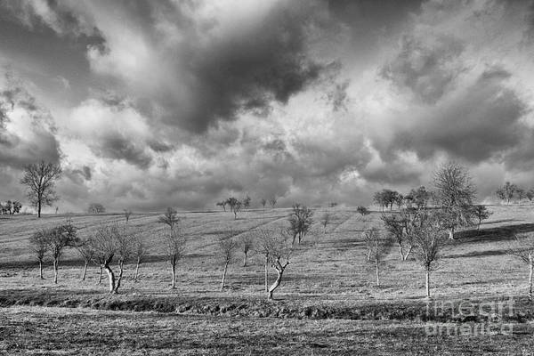 Fields Art Print featuring the photograph Scattered Trees by Brothers Beerens
