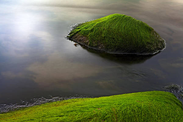 Algae Print featuring the photograph Seascape Seaweed On Rocks by Dirk Ercken