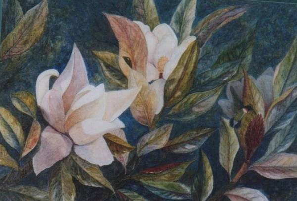 Magnolias; Humming Bird Art Print featuring the painting Serenity by Ben Kiger