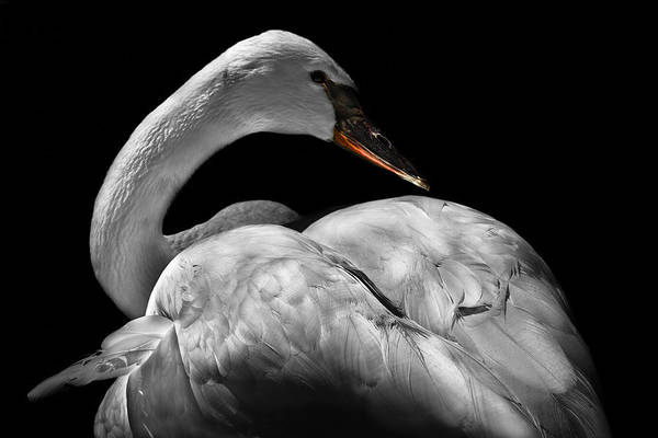 Animals Art Print featuring the photograph Serenity by Debra and Dave Vanderlaan
