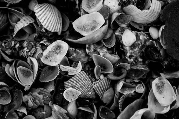 Bay Art Print featuring the photograph Shell Collection 3 by Matt Johnson