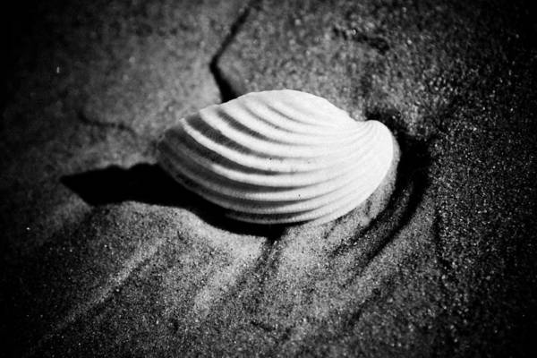 Scene Art Print featuring the photograph Shell On Sand Black And White Photo by Raimond Klavins