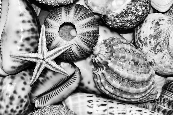 Photography Art Print featuring the photograph Shellscape In Monochrome by Kaye Menner