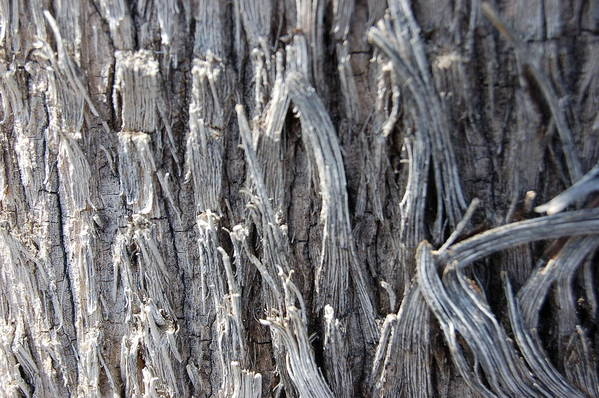 Silver Wire Heavy Strands Broken Ends Abstract Decorative Tree Bark Nature Art Print featuring the photograph Silver Heavy Metal by Linda Brody