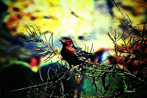 Bird Art Print featuring the digital art Sitting Alone by Tracie Howard