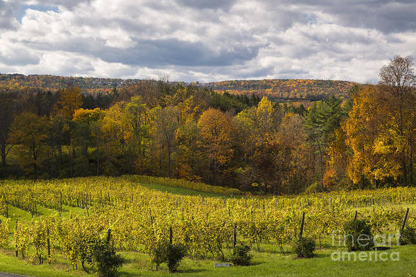 Michele Art Print featuring the photograph Six Mile Creek Vineyard by Michele Steffey
