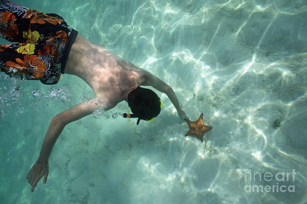 People Print featuring the photograph Snorkeller Touching Starfish On Seabed by Sami Sarkis