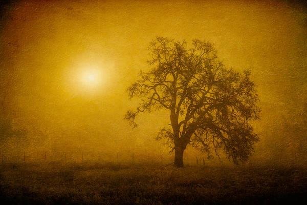 Sunrise Art Print featuring the photograph Solar Power by Randy Wood