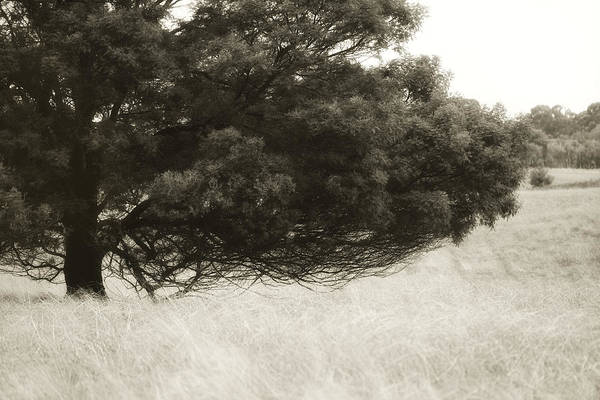 Tree Art Print featuring the photograph Somewhere To Dream by Amy Weiss
