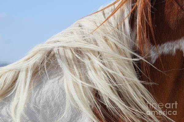 Horse Art Print featuring the photograph Sonny's Mane by Ashley M Conger