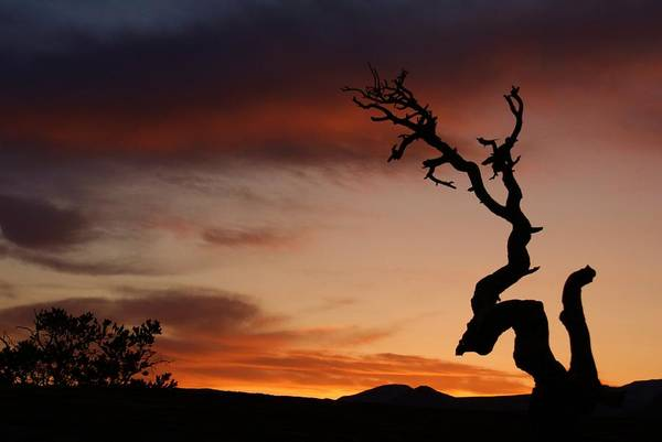 Landscape Print featuring the photograph Southwest Tree Sunset by Michael J Bauer