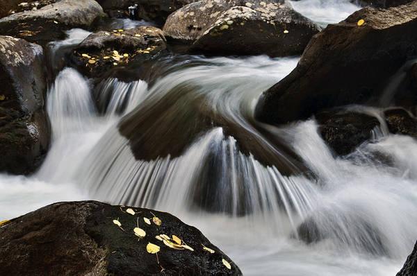 Aspen Leaves Art Print featuring the photograph Sprague Creek by Frank Burhenn