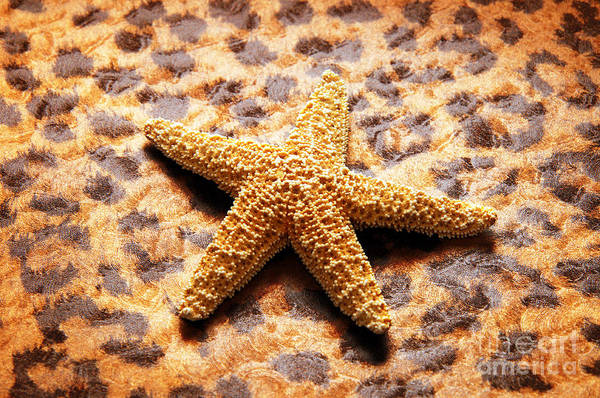 Starfish Art Print featuring the photograph Starfish Enterprise by Andee Design