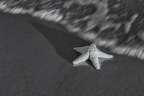 Star Art Print featuring the photograph Starfish On The Beach Bw by Susan Candelario