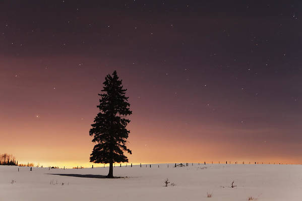 Canada Print featuring the photograph Stars In The Night Sky With Lone Tree by Susan Dykstra