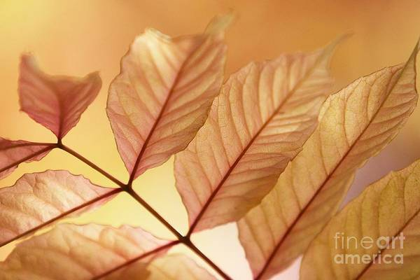 Leaves Print featuring the photograph Stems by Andrew Brooks