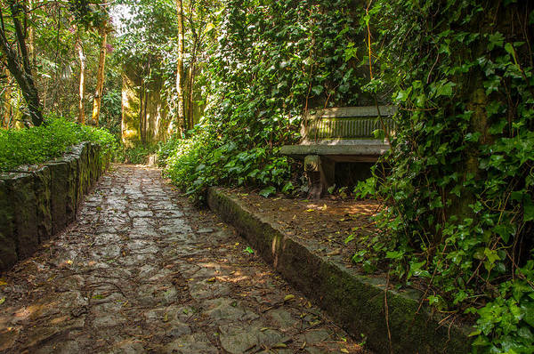 Bogota Art Print featuring the photograph Stone Path Through A Forest by Jess Kraft