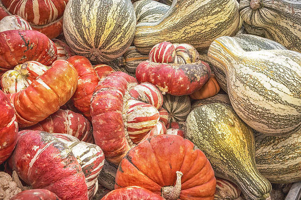 Squash Art Print featuring the photograph Stripes by Caitlyn Grasso