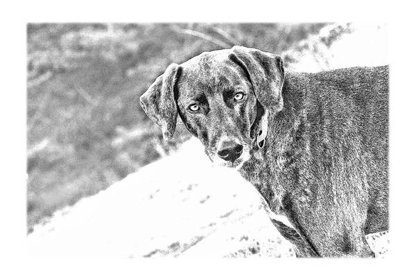 Dog Art Print featuring the photograph Such A Pretty Girl by Peggy Collins