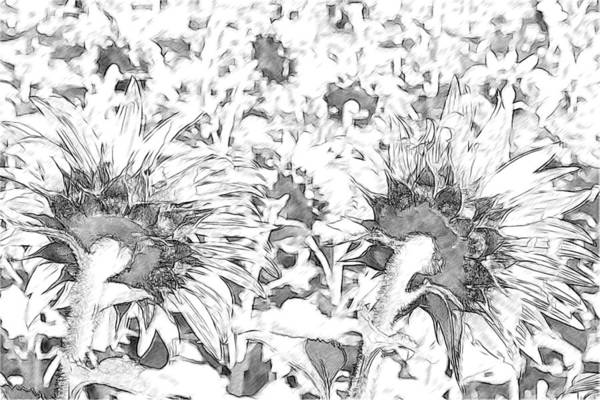 Sunflowers Art Print featuring the photograph Sunflower Drawing by Alice Gipson