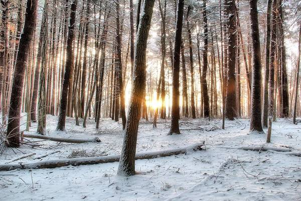 Pine Trees Art Print featuring the photograph Sunrise by Andrea Galiffi