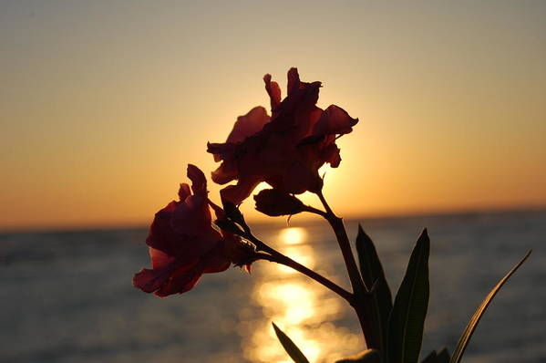 Sunset Art Print featuring the photograph Sunset Flower 2 by May Photography