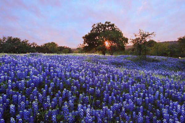 Texas Bluebonnets Art Print featuring the photograph Sunset In Bluebonnet Field by Susan Rovira