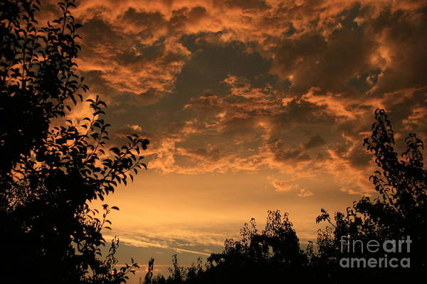 Sunset Art Print featuring the photograph Sunset In The Orchard by Cari Gesch