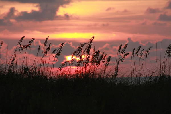 Sunset Art Print featuring the photograph Sunset With Sea Oats by Shari Bailey