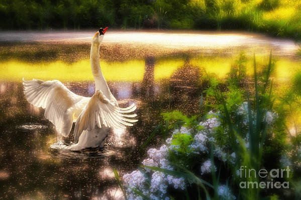 Swan Art Print featuring the photograph Swan Lake by Lois Bryan