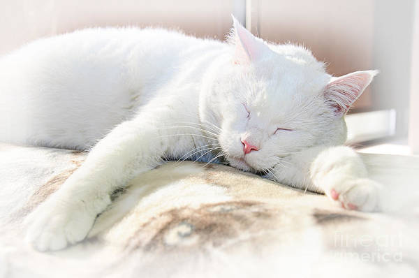 Andee Design Cats Art Print featuring the photograph Sweet Dreams by Andee Design