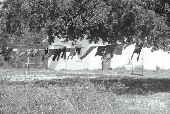 Black And White Laundry Art Print featuring the photograph Swinging Laundry by Michelle Powell
