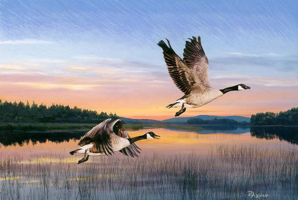 Geese Art Print featuring the drawing Taking Flight by Brent Ander