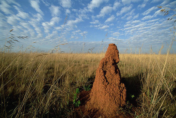 Feb0514 Art Print featuring the photograph Termite Mound In Cerrado Grassland Emas by Tui De Roy