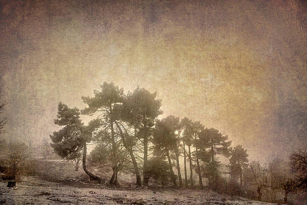 Landscapes Art Print featuring the photograph The Curved Tree by Guido Montanes Castillo