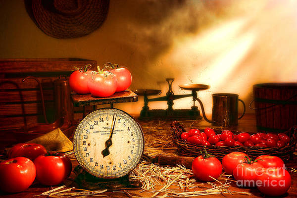 Tomatoes Art Print featuring the photograph The Old Tomato Farm Stand by Olivier Le Queinec