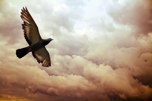 Pigeon Art Print featuring the photograph The Pigeon by Bob Orsillo