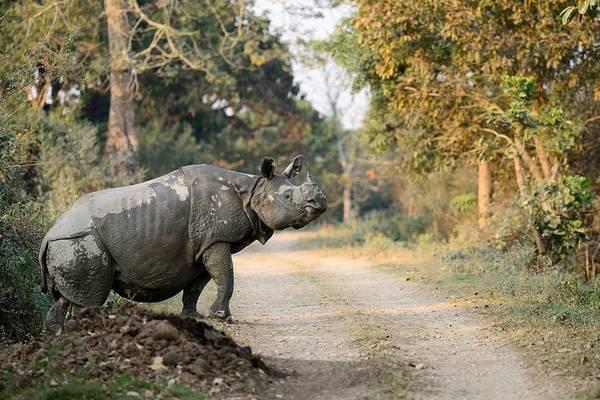 Rhino Art Print featuring the photograph The Rhino At Kaziranga by Fotosas Photography