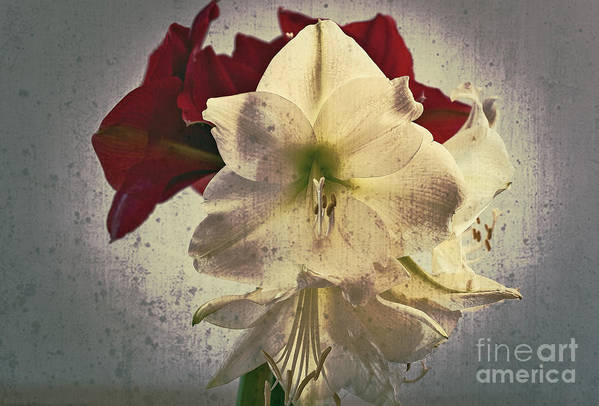 Flower Art Print featuring the photograph The Sadness Of Snow White And Rose Red by Michaela Sibi
