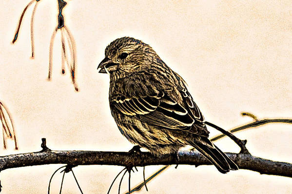 Abstract Art Print featuring the photograph The Sparrow by Chris Mcmannes