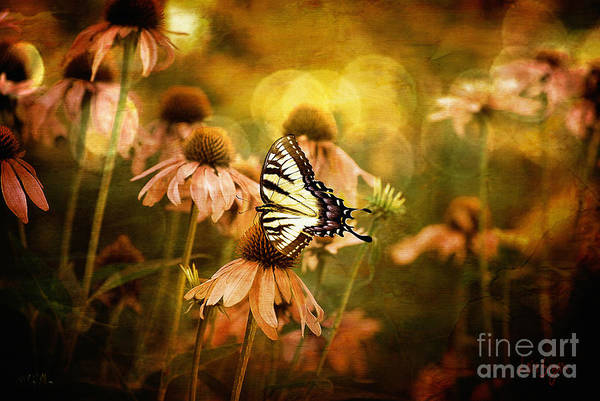 Floral Art Print featuring the photograph The Very Young At Heart by Lois Bryan