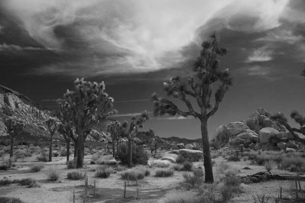 Joshua Tree National Park Art Print featuring the photograph There Will Be A Way by Laurie Search