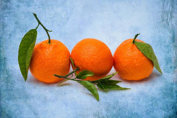 Mandarin Art Print featuring the photograph Three Tangerines by Alexander Senin