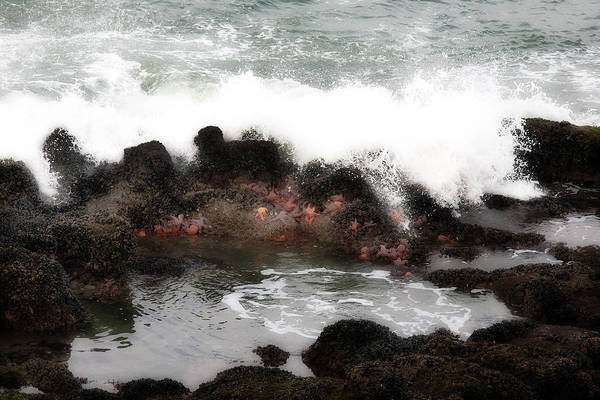 Tidalpool Art Print featuring the photograph Tide Pool by Hugh Smith