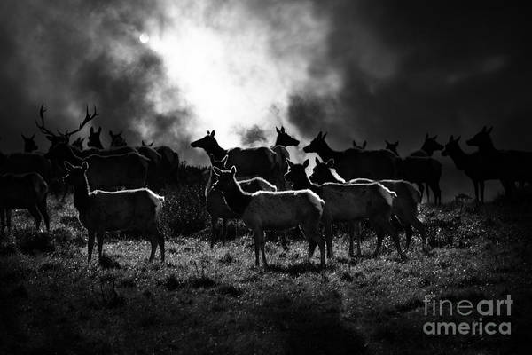 Bayarea Print featuring the photograph Tomales Bay Harem Under The Midnight Moon - 7d21241 - Black And White by Wingsdomain Art and Photography