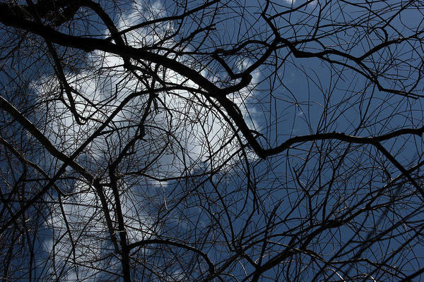 Spring Art Print featuring the photograph Tree And Clouds by Mary Bedy