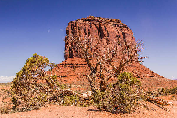 Monument Valley Art Print featuring the photograph Tree And Elephant Butte by Andreas Hohl